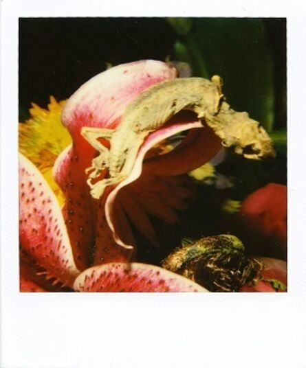 Nobuyoshi Araki, 'Flower polaroid', ca. 2000