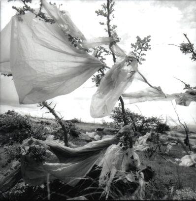 Laureana Toledo, 'Bolsas Varias', 2014