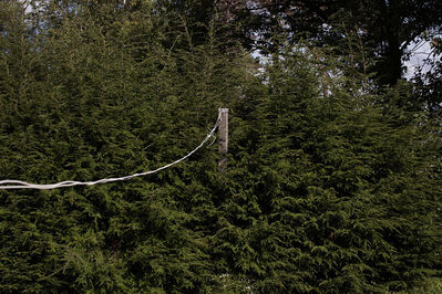 Danelle Manthey, 'Clothes Line', 2014