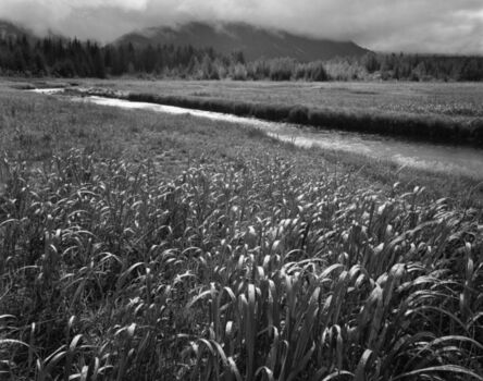 Ansel Adams, 'Rain, Beartrack Cove, Glacier Bay National Park, Alaska', 1949