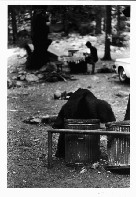 Glen Denny, 'CAMP 4 WILDLIFE', ca. 1960