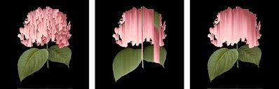 Andrea Wolf, 'Hydrangea Macrophylla, vars. 001, 002, 003', 2020