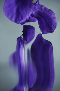 Sophie Delaporte, 'Flowers#07', 2020