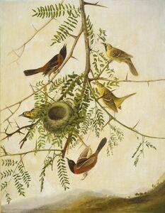 Joseph Bartholomew Kidd after John James Audubon, 'Orchard Oriole', 1830/1832
