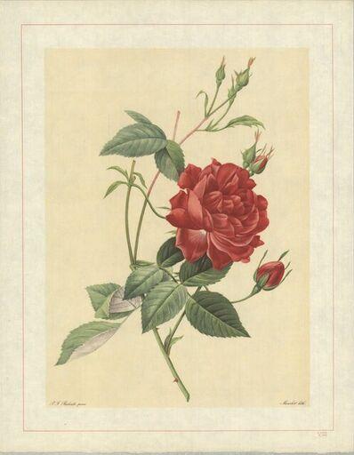 Pierre Joseph Redouté, 'Rosa Indica Cruenta; Rosier mensuel 'Slater's Crimson China'', 1938