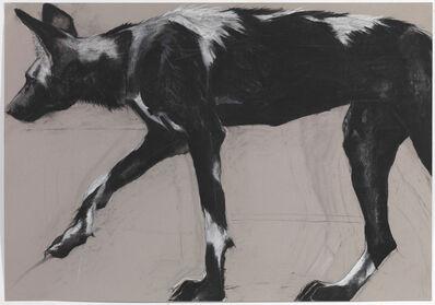 Rose Corcoran, '30. Wild Dog on Grey III'