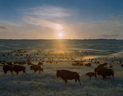Andrew Moore, 'Flying H Buffalo Ranch, Walworth County, South Dakota', 2006