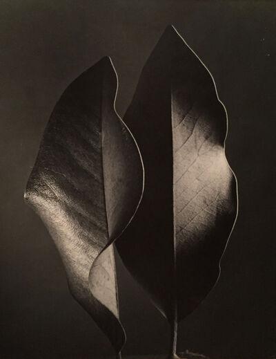 Ruth Bernhard, 'Two Leaves', Neg. date: 1952 / Print date: 1952 c.