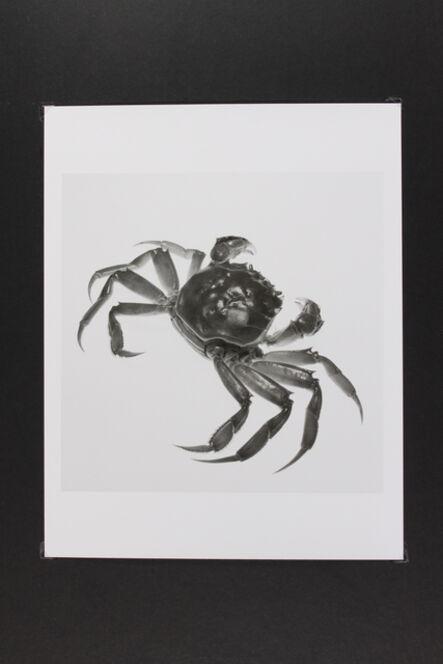 Phil-Hee Kong, 'Crab', 2014