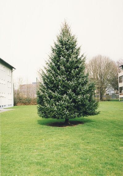 Jitka Hanzlová, 'Untitled (Christmas Tree)', 2009