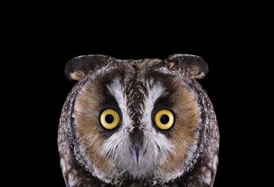 Brad Wilson, 'Long Eared Owl #1, Espanola, NM', 2011