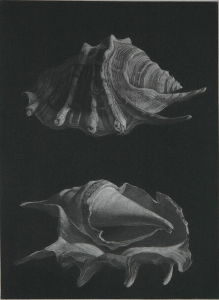 Judith Rothchild, 'Araignée', 2015
