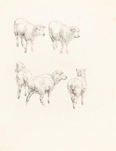 Robert Hills, 'Five Sheep'