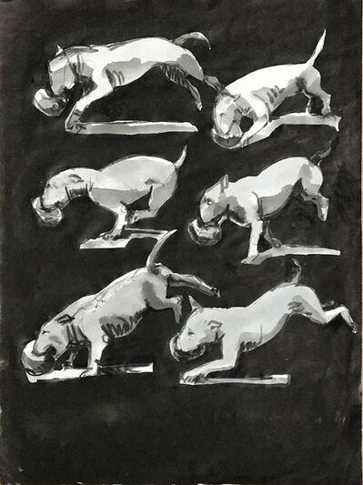Sophie Dickens, '14. Bull Terrier Studies', 2017