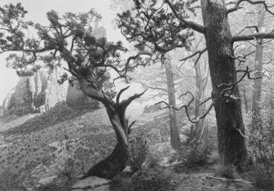 Hiroshi Sugimoto, 'Pinon Juniper Forest', 2012