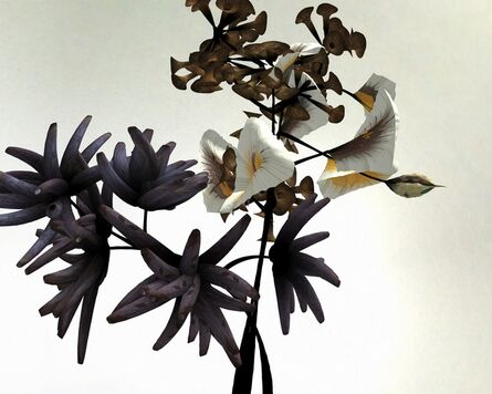 Daniel Brown, 'Still from Darwin flower animation, from On Growth and Form series', 2013