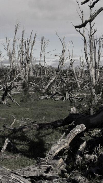 Jeffrey Blondes, 'Tierra del Fuego 360 degrees, Forest', 2013