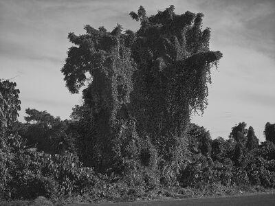 Jon Wyatt, 'Fault Line X', 2015