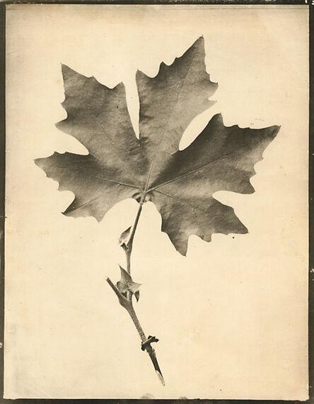 Eugene Charles De Gayffier, 'Study of Foliage, Wild French Plant', 1867c