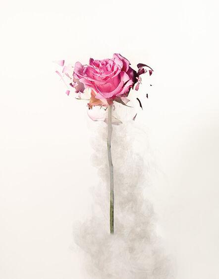 Dan Saelinger, 'Rose Explosion 2', 2020