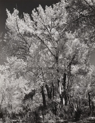 Ansel Adams, 'Autumn, Chama Valley, New Mexico', 1951