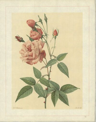 Pierre Joseph Redouté, 'Rosa Indica Vulgaris; Rosier de Chine 'Old Blush China'', 1938