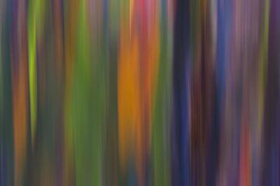 Damián Hernández, 'Cortezas, Colores en Movimiento Filage I', 2015