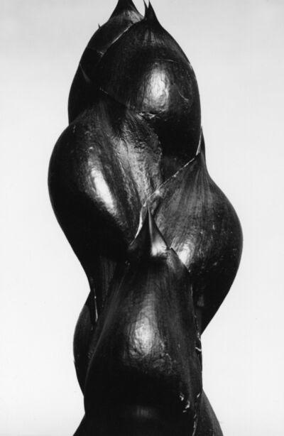 Brett Weston, 'Amaryllis Bud', 1967