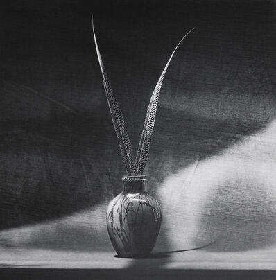 Robert Mapplethorpe, 'Feathers', 1985