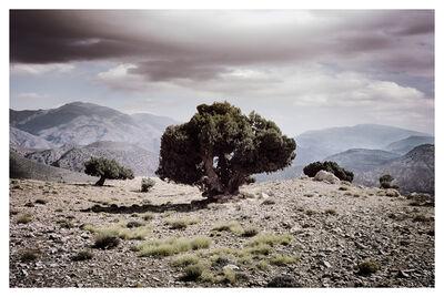 Bernhard Quade, 'Atlas Tree, Morocco', 2014