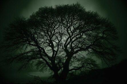 Wonjae Sou, 'Guardian Tree #7, Asan', 2018