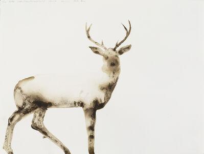 Alexis Rockman, 'White-Tailed Deer (Odocoileus virginianus)', 2014