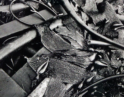Minor White, 'Untitled (Kelp)', 1949