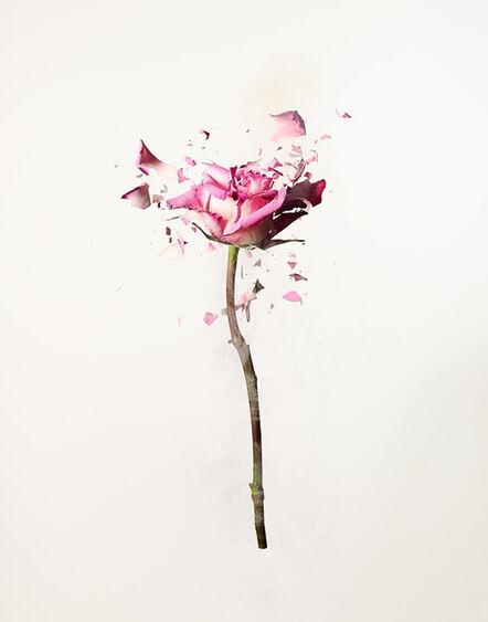 Dan Saelinger, 'Rose Explosion 1', 2020
