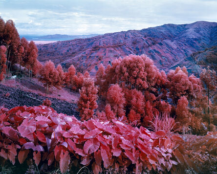 Richard Mosse, 'I Shall Be Released', 2015