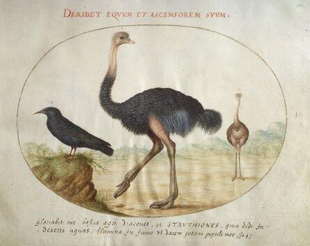 Joris Hoefnagel, 'Animalia Volatilia et Amphibia (Aier): Plate I', ca. 1575/1580