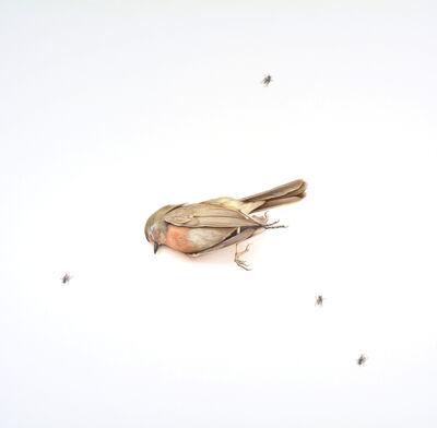 Francisco Souto, 'Little Bird', 2017
