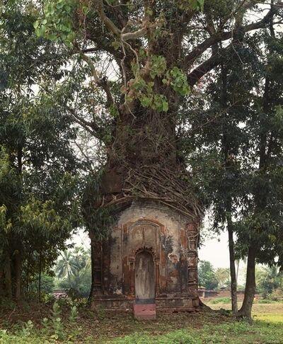 Laura McPhee, 'Banyan Tree and 16th Century Terracotta Temple, Attpur, West Bengal, India', 1998
