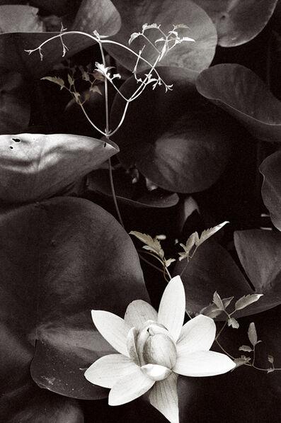 Vera Mercer, 'Leaf Waterlily', 1968