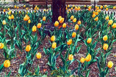 Carolyn Brady, 'Yellow Tulip Bed', 1986