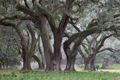 Peter Vanderwarker, 'Spring Island, South Carolina', 2012