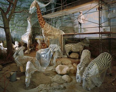 Richard Barnes, 'Academy Animals From Animal Logic', 2004