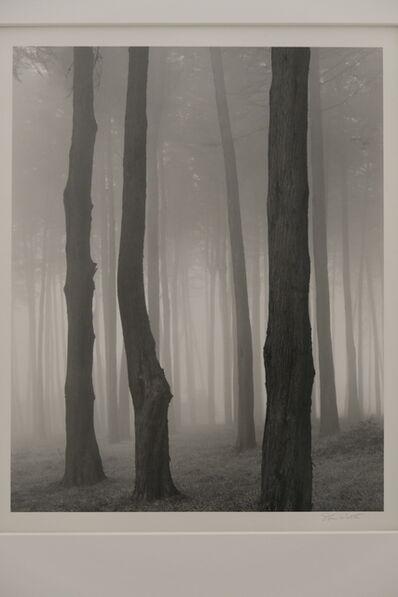 Don Worth, 'Trees and Fog, San Francisco', 1970-1972