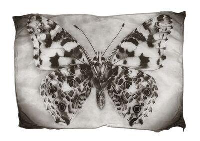 Gregor Törzs, 'Schmetterling', 2014