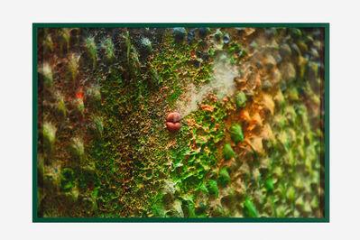 Mika Rottenberg, 'Study #3 (green lips)', 2016