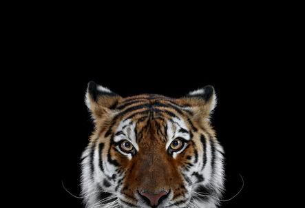 Brad Wilson, 'Tiger #6, Los Angeles, CA', 2010