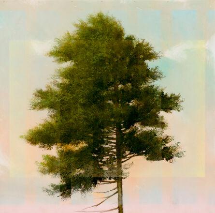 Peter Hoffer, 'Pine 1', 2016