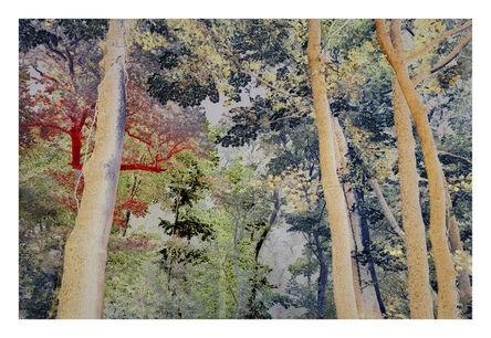 André Lichtenberg, 'Dream Forest', 2020
