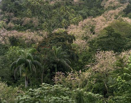 Andrew Moore, 'Los Campos Verdes'