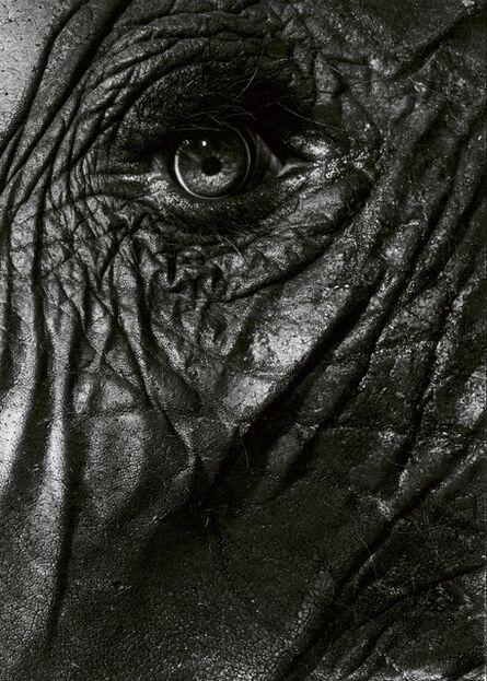 Walter Schels, 'Elephant eye', 1993